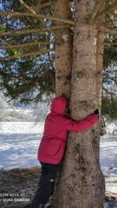 se ressourcer auprès des arbres